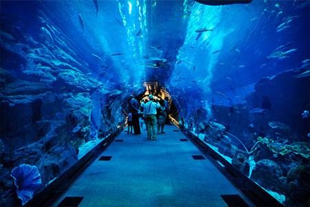 دنیای زیر آب (آکواریوم پاتایا)