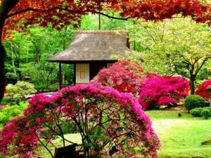 باغ رز تایلندی در تور تایلند