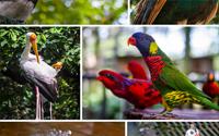 شاتل رایگان به باغ پرندگان