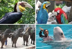 بازدید از باغ وحشی زیبا با تور تایلند