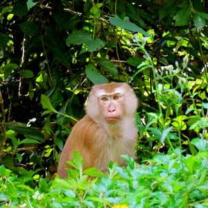 تپه میمون ها در تور تایلند
