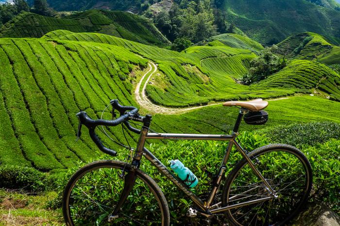 %post ارتفاعات کامرون |تور مالزی