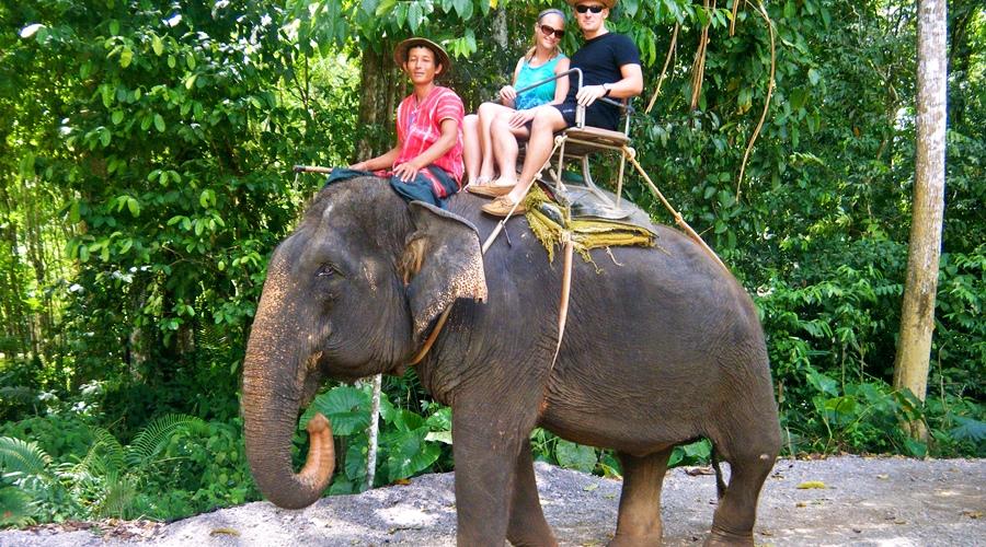 تور فیل سواری
