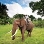 عکس-های-افریقای-جنوبی2