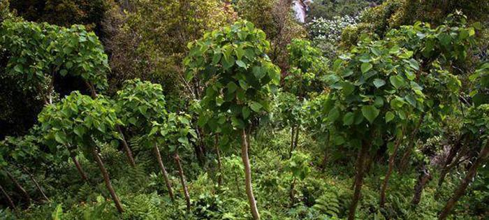 پوشش گیاهی تایلند